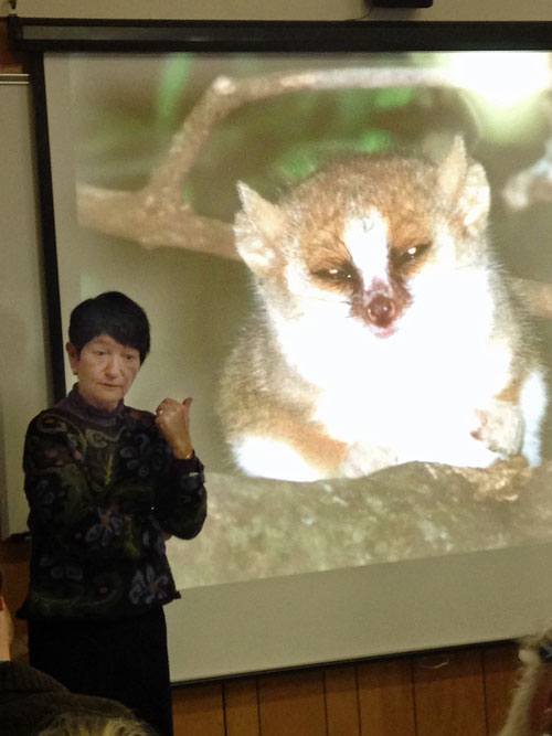 Dame Alison and the bedeviled mouse lemur of Beza Mahafaly
