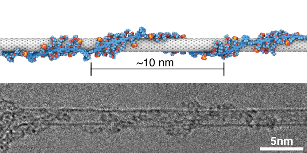 A carbon nanotube, shaped like a rod, is wrapped in a helical coating of polymer