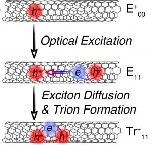 A diagram of how a trion is formed in carbon nanotubes.