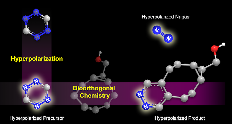 A stylized chemical diagram of the hyperpolarization process