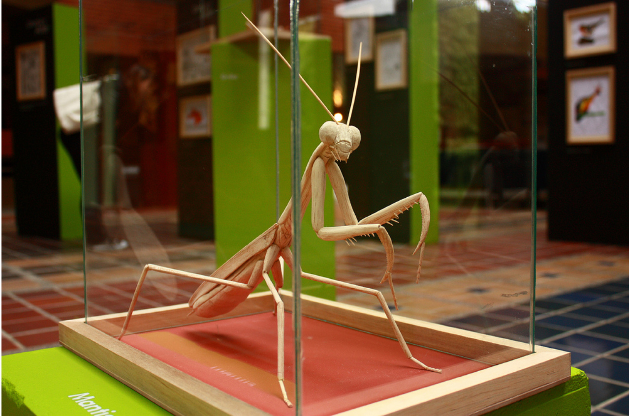Duke biologist Alejandro Berrio creates larger-than-life insect sculptures. This wooden mantis was exhibited at the Art Science Gallery in Austin, Texas in 2013.